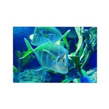 Tropical Fish in Turquoise and Cobalt Blue Rectang