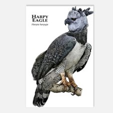 Harpy Eagle Postcards (Package of 8)