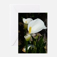 White Lily Greeting Card