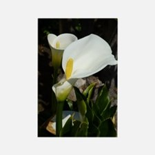 White Lily Rectangle Magnet