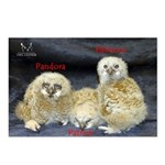 2013 Owlets Postcards (Package of 8)