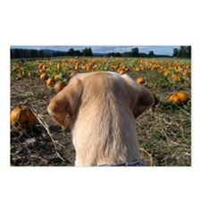 Nov Lab of the Month Postcards (Package of 8)