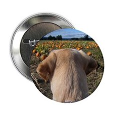 Nov Lab of the Month Button