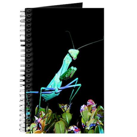 Helaine's Praying Mantis 2 Journal