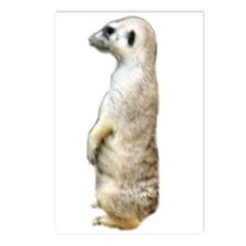 meerkat 2 Postcards (Package of 8)