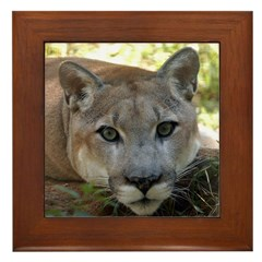 Cougar named Shadow Framed Tile