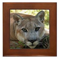 Cougar named Shadow Framed Tile