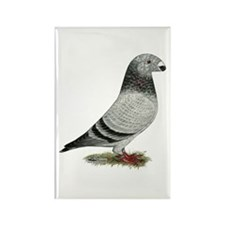 Show Racer Grizzle Pigeon Rectangle Magnet