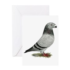 Show Racer Grizzle Pigeon Greeting Card