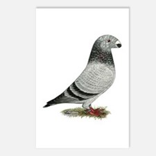 Show Racer Grizzle Pigeon Postcards (Package of 8)