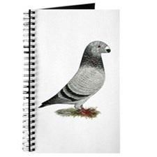 Show Racer Grizzle Pigeon Journal