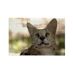 White Footed Serval Rectangle Magnet (100 pack)
