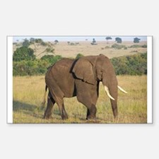 African Elephant Decal