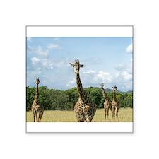 Posing African Giraffes Sticker