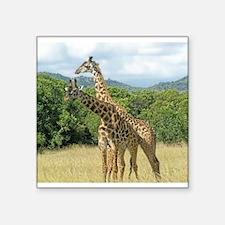 Mara Giraffes Sticker