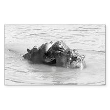 Dualing Hippos Decal