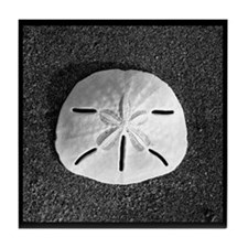 Sand Dollar (B&W) Tile Coaster