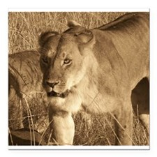 """African Lioness Square Car Magnet 3"""" x 3"""""""