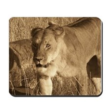 African Lioness Mousepad
