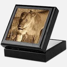 African Lioness Keepsake Box