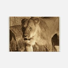 African Lioness Rectangle Magnet