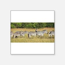 Dazzle of Zebras Sticker