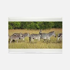 Dazzle of Zebras Rectangle Magnet