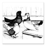 Koros Tumbler Pigeons Square Car Magnet 3