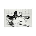 Koros Tumbler Pigeons Rectangle Magnet (10 pack)