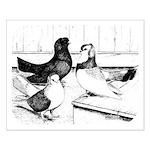 Koros Tumbler Pigeons Posters