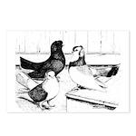 Koros Tumbler Pigeons Postcards (Package of 8)