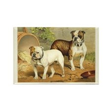 Illustration of Two Bulldogs Rectangle Magnet