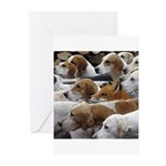 The Foxed Greeting Cards (Pk of 10)
