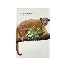 Kinkajou Rectangle Magnet