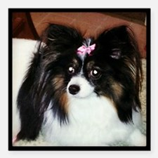 "Papillon Square Car Magnet 3"" x 3"""
