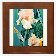 Irises! Spring flower photo! Framed Tile
