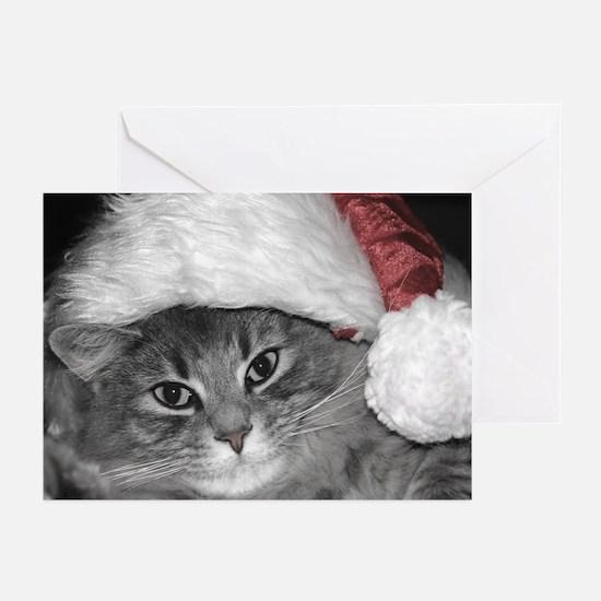 'Santa Claws' Kitty Greeting Cards (Pk of 10)