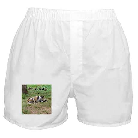 wild dog Boxer Shorts
