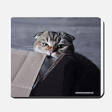 Noodles the cat - moving box Mousepad