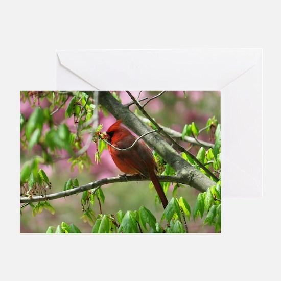 Blossoming Cardinal Greeting Card