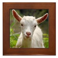 Baby goat Framed Tile