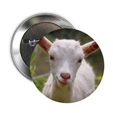 "Baby goat 2.25"" Button (10 pack)"