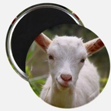 Baby goat Magnet