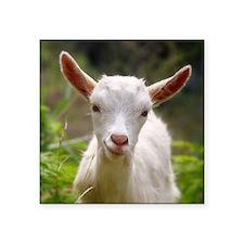 Baby goat Sticker