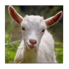 Baby goat Tile Coaster