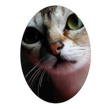 Happiness is a Singapura Cat Ornament (Oval)