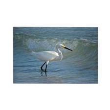 Snowy egret Rectangle Magnet