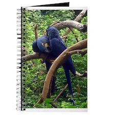 macaws Journal