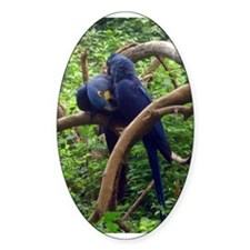 macaws Oval Decal