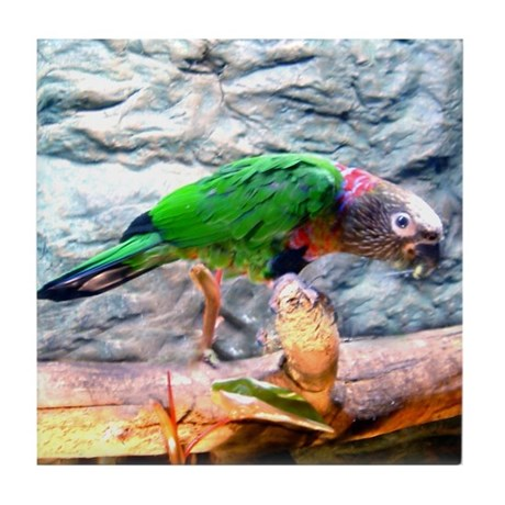hawk-headed parrot Tile Coaster